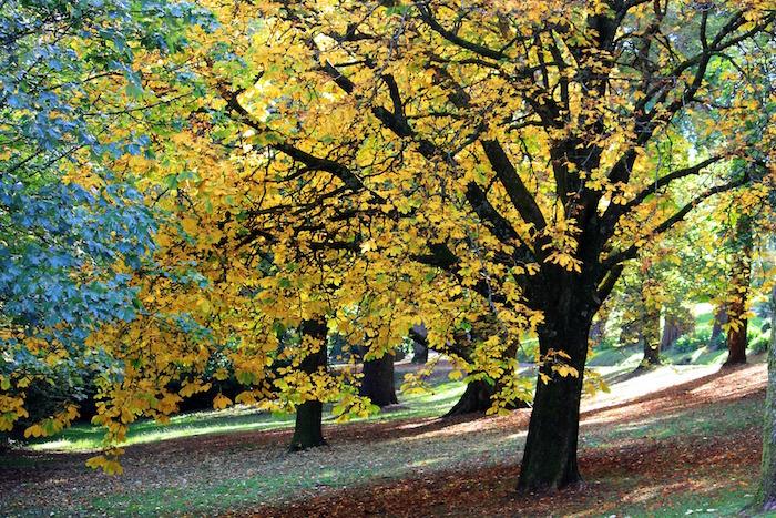 autunno_castagneto